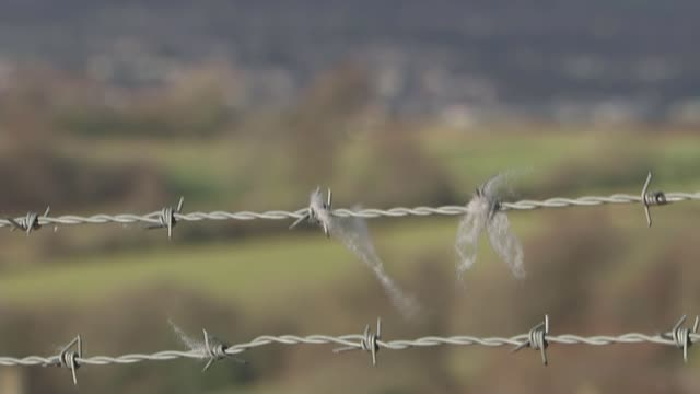 story of scott howell's battle with covid19 t051219008 / 5122019 strands of wool on barbed wire fence tilt up pull focus town seen in valley - valley stock videos & royalty-free footage