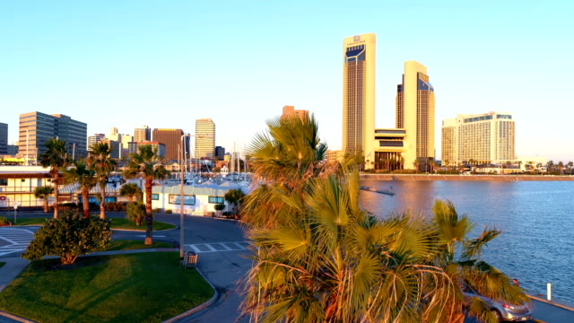 corpus christi , texas , usa aerial drone view with golden hour tropical palm trees along bayfront marina - corpus christi texas stock videos & royalty-free footage