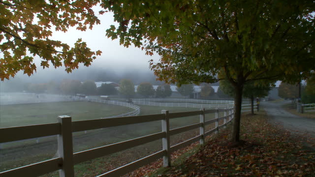 corral fence with maples in early morning fog - corral stock videos & royalty-free footage
