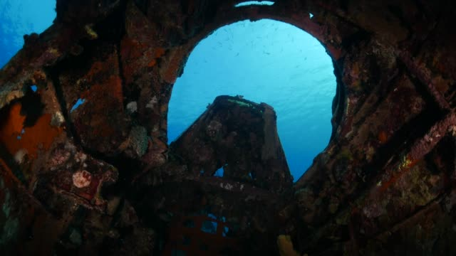 stockvideo's en b-roll-footage met gecorrodeerde cockpit van wwii onderwater watervliegtuig wrak - oahu