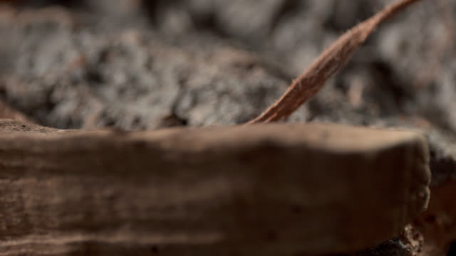 Schors en hout
