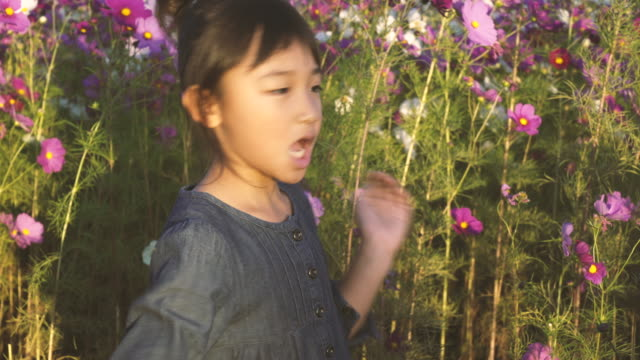 cosmos flowers and girl - satoyama scenery stock videos & royalty-free footage