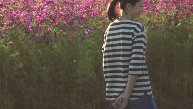 cosmos flowers and women - satoyama scenery stock videos & royalty-free footage