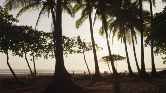 vidéos et rushes de costa rica, esterillos beach, palms trees on beach and people in background - palmier