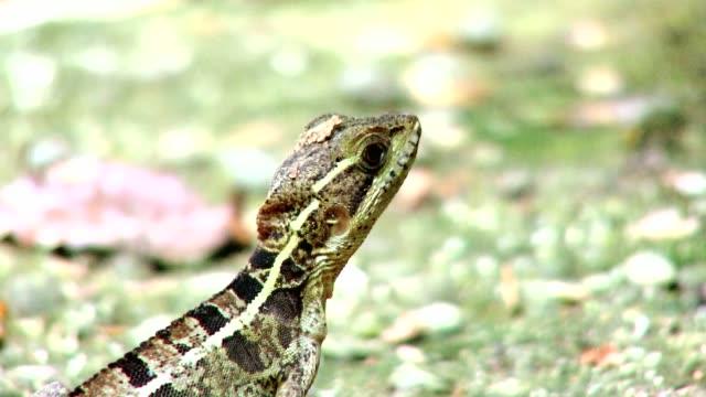 costa rica fauna - ハゴロモガラス点の映像素材/bロール
