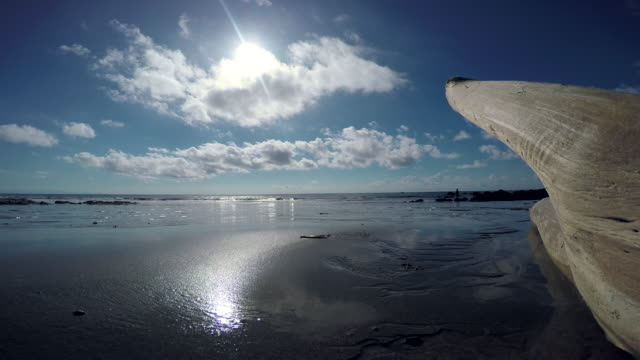 stockvideo's en b-roll-footage met costa rican beach - drijfhout
