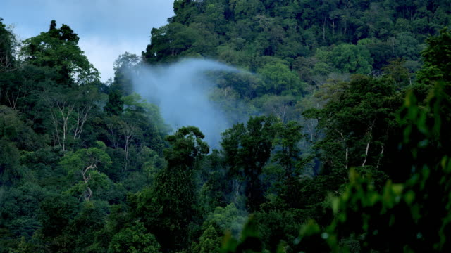 costa rican rainforest canopy: rolling fog - temperate rainforest stock videos & royalty-free footage