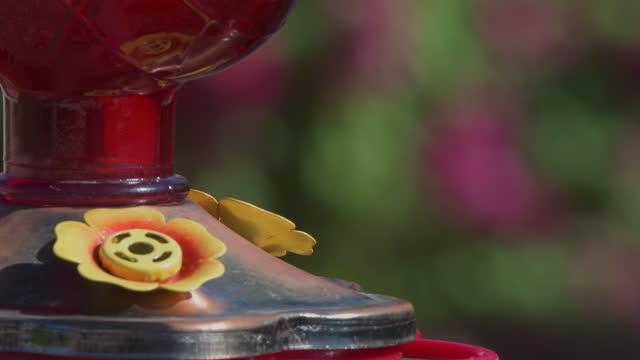 vídeos de stock e filmes b-roll de costa's hummingbird (calypte costae) feeding in arizona - colibri de costa