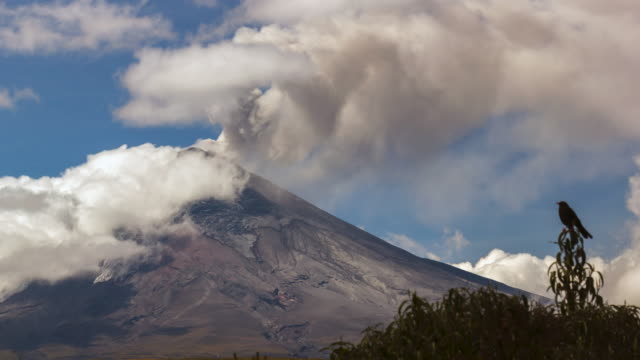 Cotopaxi Volcano, Ecuador erupting on the  21st of October 2015. A Great Thrush (Turdus fuscater) is perched in the foreground