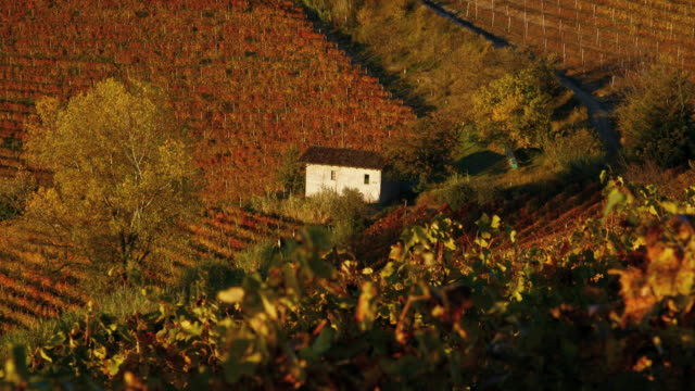 cottage in the vinyards, nr alba, langhe, nr piedmont, italy, europe - piemonte video stock e b–roll