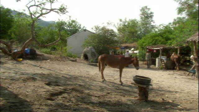 WS, PAN, Cottages and animals in small village, Cordoba, Argentina