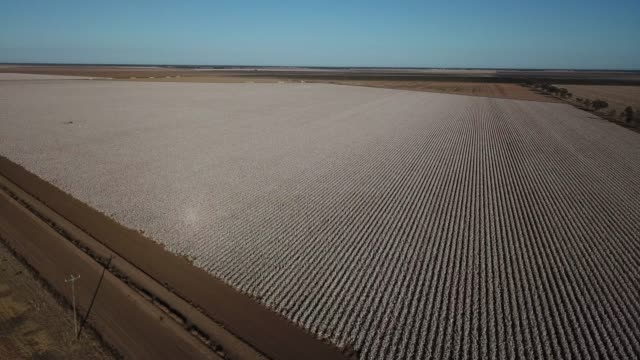 cotton farm - cotton stock videos and b-roll footage