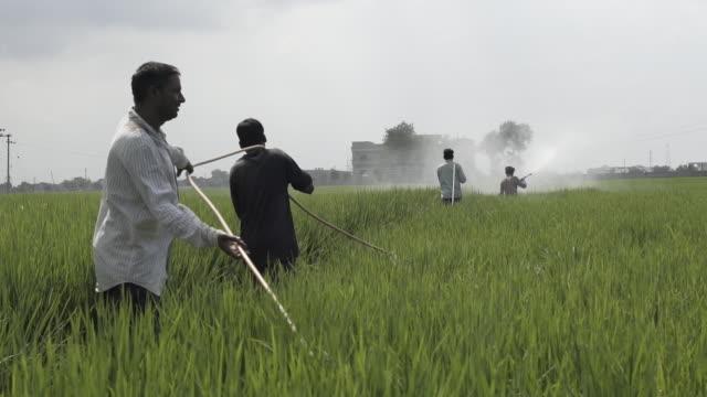 cotton farms near faehbad, haryana, india, on monday, september 10, 2018. - agrarland stock-videos und b-roll-filmmaterial