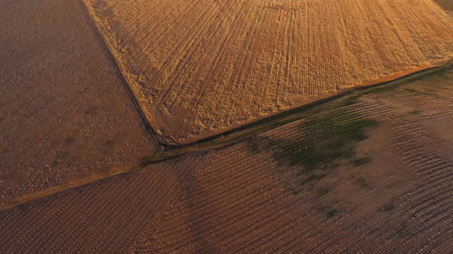 cotton fields ready for harvesting at sunset in autumn, texas, usa. looking-down video showing a regular pattern, agricultural-themed video background. aerial drone footage with the tilting-up camera motion. - plowed field stock videos & royalty-free footage