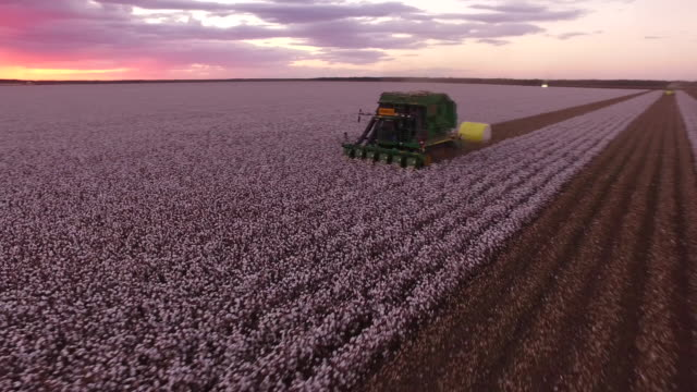 cotton harvest - cotton stock videos & royalty-free footage