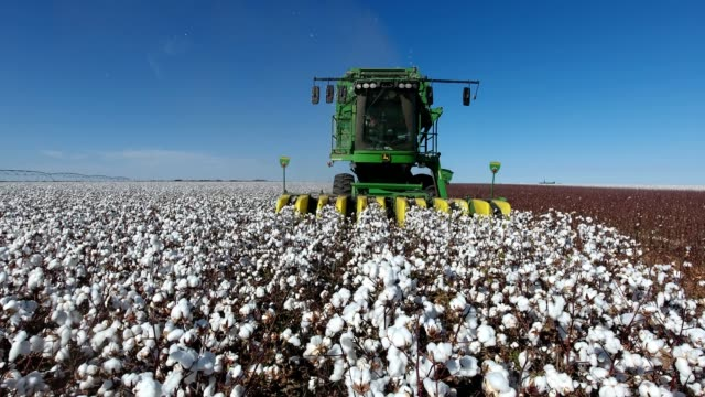 cotton harvest - agricultural machinery stock videos & royalty-free footage