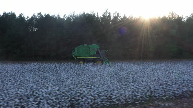 cotton harvesting at atkinson farm, aerial view in lee county, south carolina, u.s., on wednesday, october 13, 2021. - dirt track stock videos & royalty-free footage