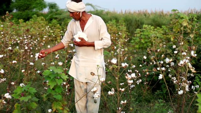 cotton harvesting - cotton stock videos & royalty-free footage