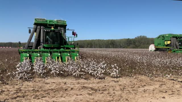 vídeos y material grabado en eventos de stock de cotton picker harvests cotton in a field in glendora, u.s. on thursday, october 1, 2020. - tierra cultivada