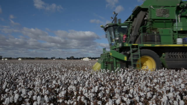 cotton processing at southern cotton gin and cotton harvesting at walsh farms australia on thursday may 32 2018 - cotton ball stock videos & royalty-free footage