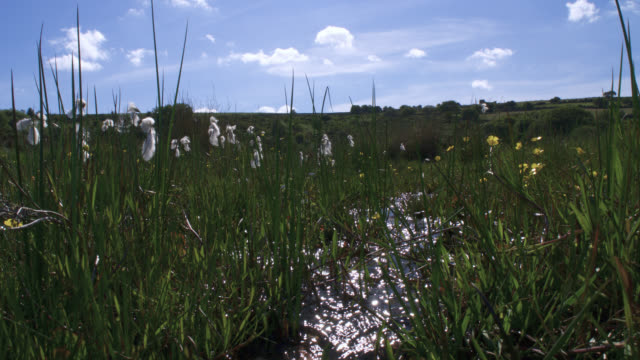 tl cottongrass flowers and stream in bog, uk - bog stock videos & royalty-free footage