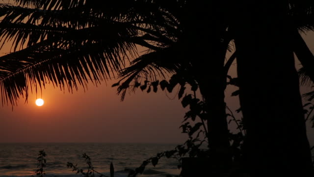 coucher de soleil sur goa en inde - fan palm tree stock videos & royalty-free footage