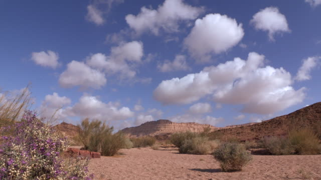 couds over desert views, plants and flowers in ramon crater