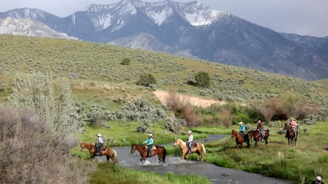 country cowboys and cowgirls ride through a stream - utah stock videos & royalty-free footage