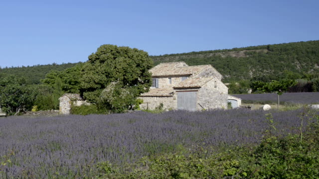 Country house in a lavender field