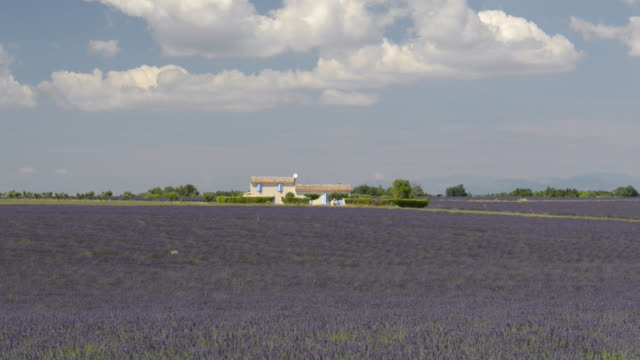 Country house in lavender field