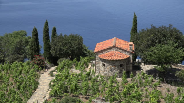 Country house with vineyard and cypress by the sea