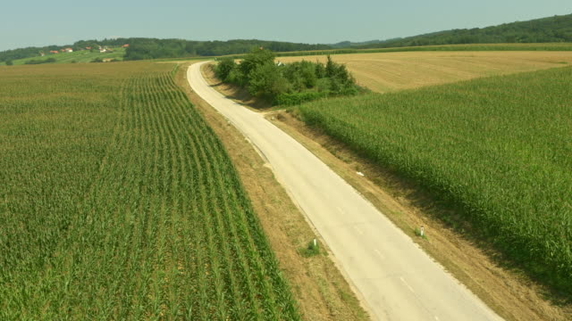 AERIAL Country road among corn fields