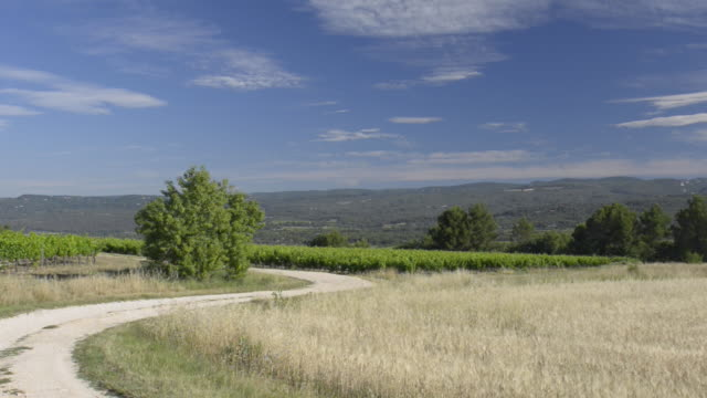 country road between oat field and vineyard - luberon stock-videos und b-roll-filmmaterial