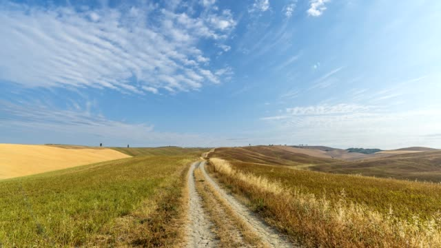 Country road in hilly  landscape, San quirico d'orcia, Siena Province, Val d'Orcia, Tuscany, Italy