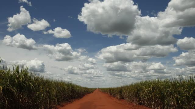 vídeos de stock, filmes e b-roll de country road, sugar cane plantation in sao paulo country side, brazil - orgânico