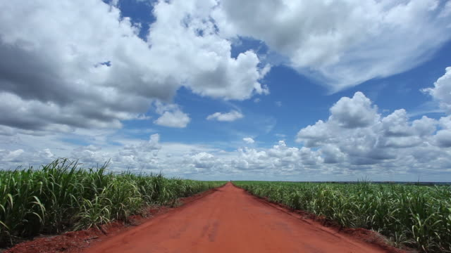country road, sugar cane plantation in sao paulo country side, brazil - sugar cane stock videos and b-roll footage