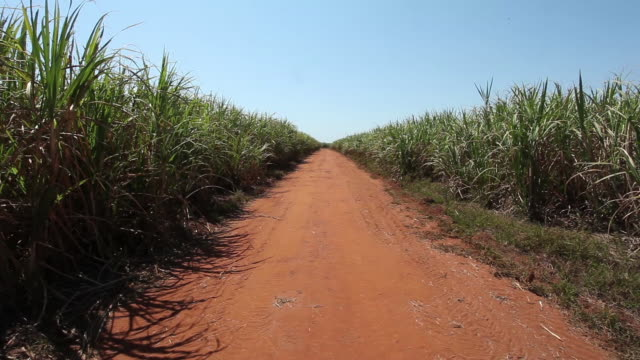 country road, sugar cane plantation in sao paulo country side, brazil - hay stock videos and b-roll footage