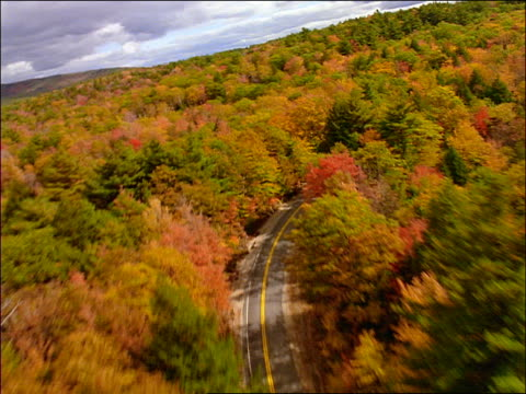 AERIAL country road through forest in Autumn / New England