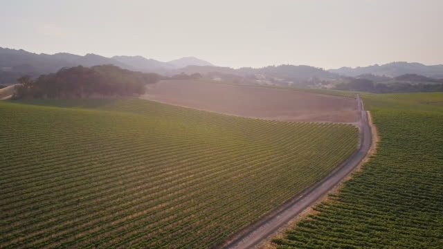 Country Road Through Sonoma County Wineries
