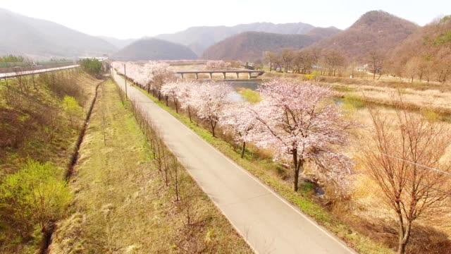 country road with cherry blossom - von bäumen gesäumt stock-videos und b-roll-filmmaterial