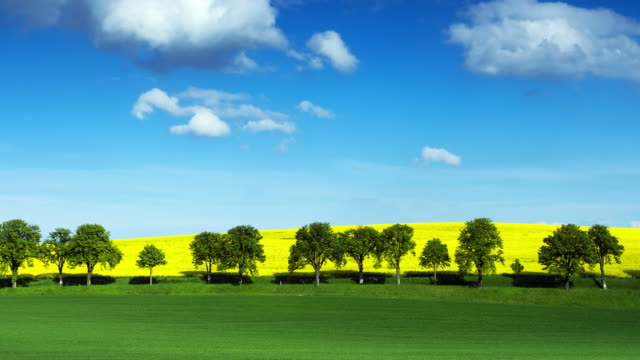 Country Road With Yellow Canola Fields; TIME LAPSE