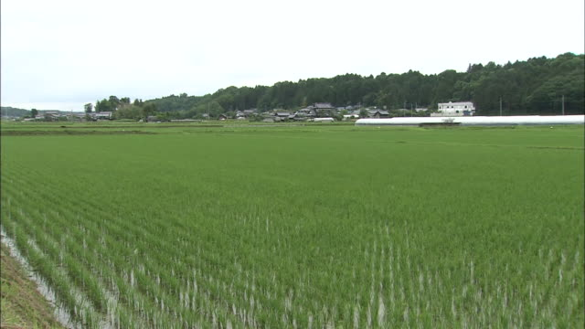 country view with rice paddy - 水田点の映像素材/bロール