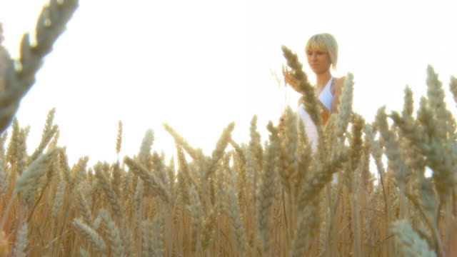 hd crane: country woman in field of wheat - crane shot stock videos & royalty-free footage