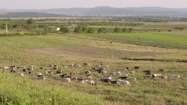 countryside, bulgaria - bulgaria stock videos & royalty-free footage