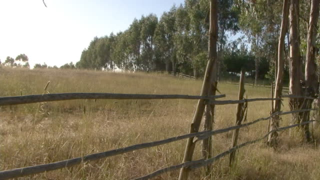 countryside. paisaje de campo - madera material stock videos and b-roll footage