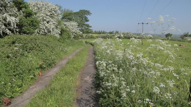 countryside, heage, derbyshire dales, derbyshire, england, uk, europe - wildflower stock videos & royalty-free footage