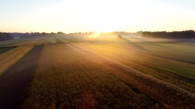 aerial countryside in the morning mist - barley stock videos and b-roll footage