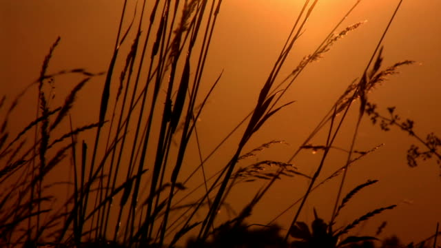 HD: Countryside sunset