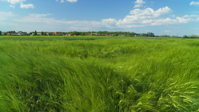 HD SLOW MOTION: Countryside With Green Wheat Fields
