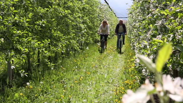 couple bike past blossoms, through spring orchard - blossom stock videos & royalty-free footage